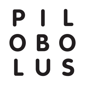 pilobolus_logo